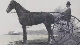 Pavia: con ENPA partendo da Vandalo per arrivare ai nostri cavalli