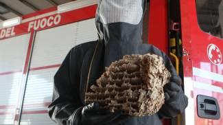 Legnano, ladri di api rubano alveare nella parrocchia dei frati