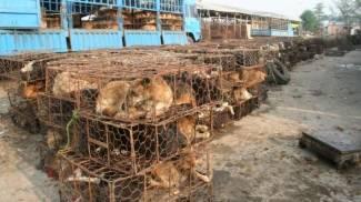 """""""Contro il massacro di Yulin il governo si faccia sentire"""""""
