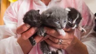 Salvati undici gatti segregati in un appartamento del centro