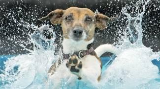 Cani e gatti non sudano e hanno bisogno sempre di acqua fresca