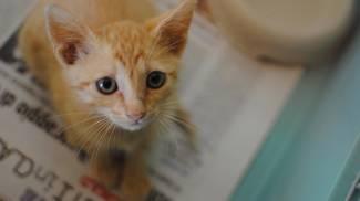 """Emergenza gattini a Pistoia: sono 80 in cerca di casa e il rifugio """"scoppia"""""""