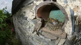 """""""C'è un uccellino caduto dal nido"""". """"Meglio lasciarlo dov'è"""""""