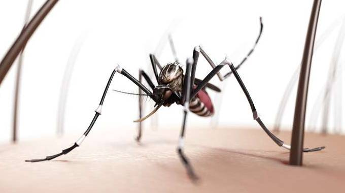 Eliminare le zanzare per sempre? Basta un bicchiere - il Resto del Carlino - Notizie di Bologna ...