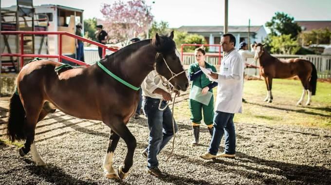 Controlli veterinari accurati alla Expointer di Esteio, foto AFP
