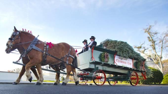 Casa Bianca, l'albero di Natale arriva in carrozza