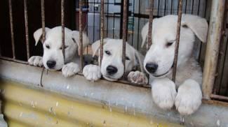 """Gli abusi sugli animali sono la """"spia"""" di pericolo sociale"""