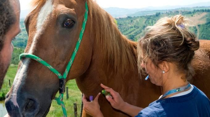 Detrazione spese veterinarie a prova di scontrino