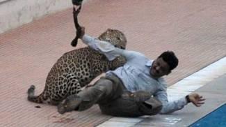 India, leopardo penetra in una scuola, panico e 6 feriti