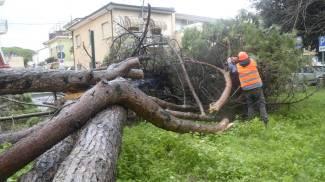 Maltempo in Versilia: alberi caduti, raffiche di vento e tempeste di sabbia