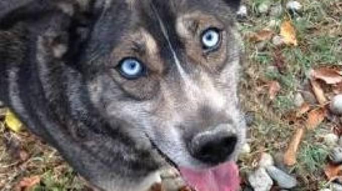 Il cane scappato in tangenziale, Celeste
