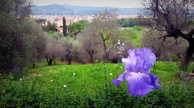 Firenze riapre il giardino dell 39 iris meraviglie in fiore - Giardino dell iris firenze ...