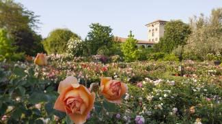 Rovato, riapre il giardino delle rose a Castello Quistini