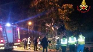 Caronno Pertusella, auto finisce fuori strada e si ribalta: morta 21enne, ferito 28enne
