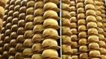 Castelnuovo, rubate cento forme di Parmigiano Reggiano
