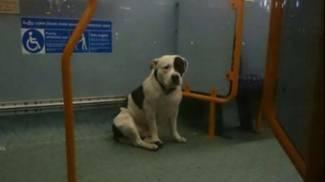 Cane abbandonato sul bus a Londra. La Rete si mobilita