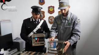 Garbagnate, ricettazione e detenzione illegale di fauna protetta: denunciate 5 persone