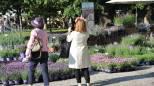Fiori e piante a Milano, ai Giardini Indro Montanelli arriva Orticola