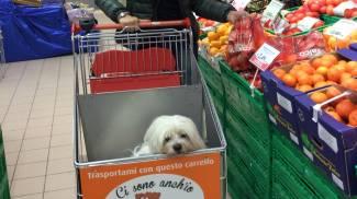 In città arriva il primo supermercato dove entrano cani e gatti