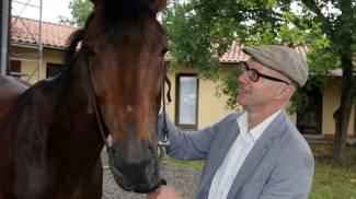 Fucecchio, sta bene il cavallo Djib: era caduto durante la batteria del palio / VIDEO