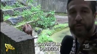 """Striscia a Caiano: """"Vergogna, l'orso bruno muore in solitudine"""""""