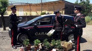 Coltiva piante di marijuana, arrestato pusher di Orzinuovi