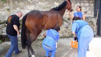 E' già tempo di Quintana, due cavalli non passano le visite