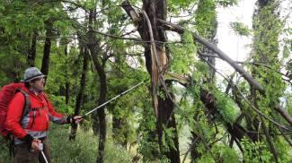 Maltempo, paura a Fiesole per la caduta di alberi: ferito un uomo