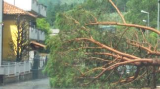 Meteo, allagamenti e alberi abbattuti