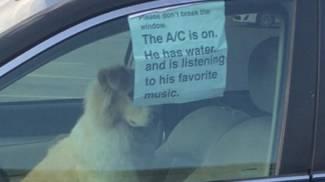 """""""Per favore non rompete il vetro, il cane sta bene e ha l'aria condizionata"""""""