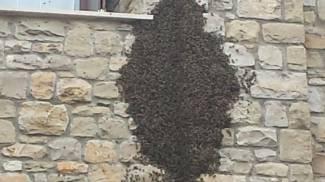 Merate, condominio assediato dallo sciame d'api
