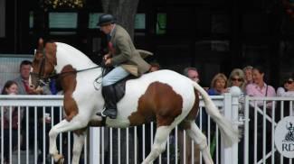 Gita didattica? all'Horse Show di Dublino!