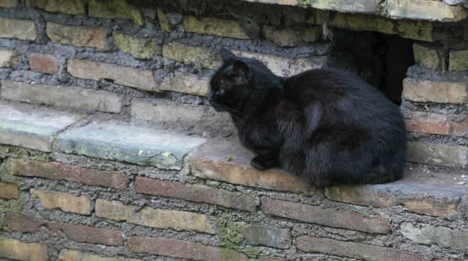 Gatti sfrattati dalla parrocchia non vogliamo polemiche for Allontanare i gatti
