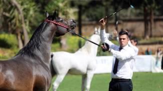 Palermo: i cavalli PSA tornano al Parco della Favorita