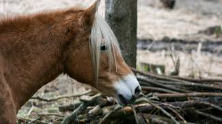 Cavallo in una foto L.Gallitto