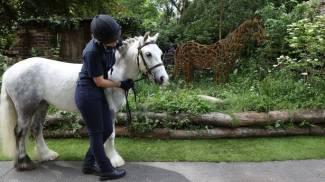 Al Chelsea Flower Show 2017 vince il giardino di Clippy, un pony salvato dal WHW