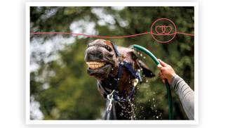 Che afa fa: e il cavallo? 5 trucchi (più uno) per difenderlo dal caldo