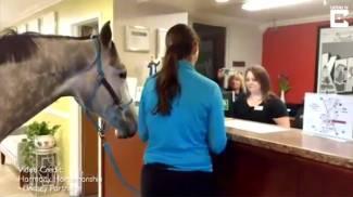 Il tuo hotel è pet-friendly? allora ci sta anche il mio cavallo!