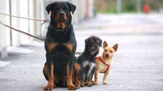 Alcuni cagnolini (foto di repertorio)